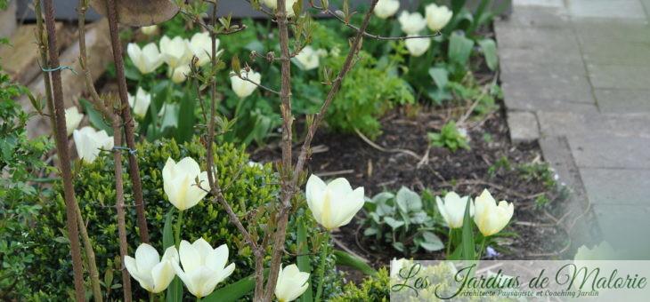 6 belles variétés de tulipes blanches