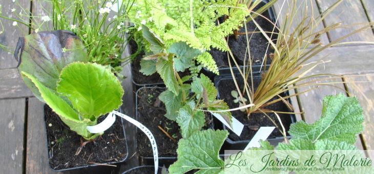 Fête des plantes d'Aywiers: mes achats