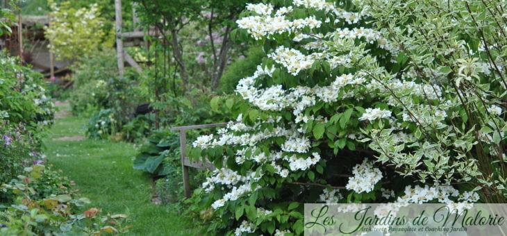 Chroniques de mon jardin: Beautés du moment…