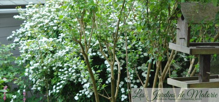 Chroniques de mon jardin : cette semaine au jardin