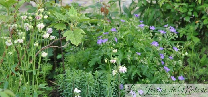 Chroniques de mon jardin : Contemplation…