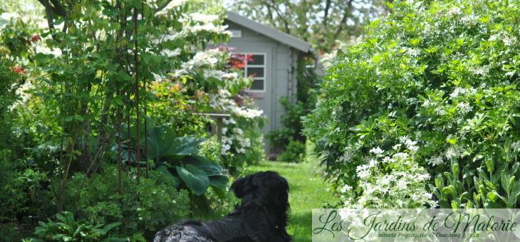 Chroniques de mon jardin: fin mai