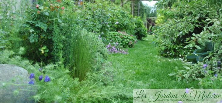Chroniques de mon jardin : Après la pluie