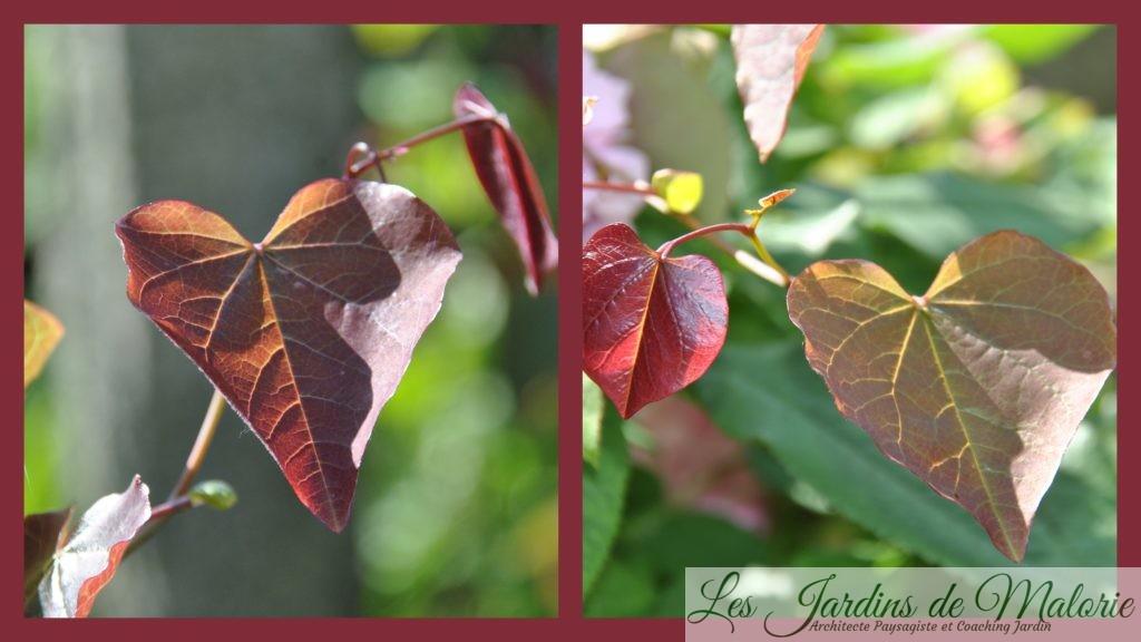 Chroniques de mon jardin: Le massif du toboggan - Les Jardins de Malorie