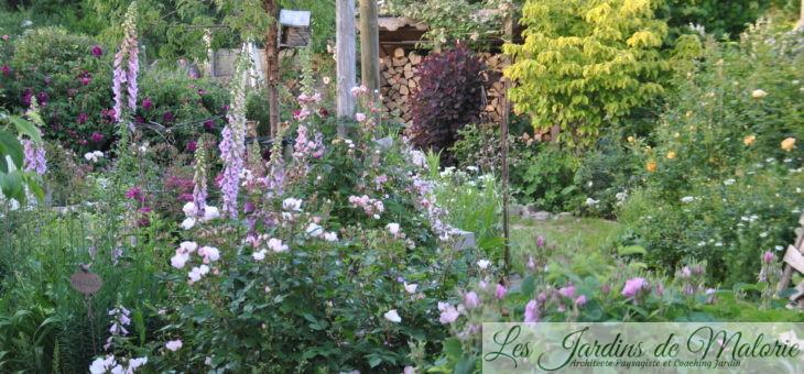 Chroniques de mon jardin: Beautés de Juin