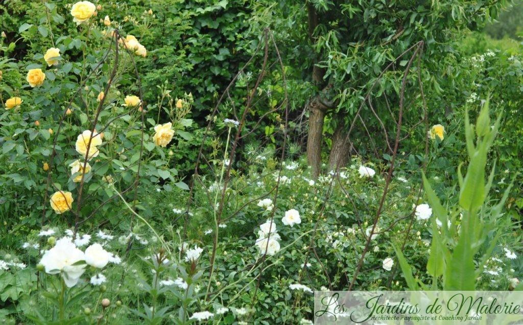 Chroniques de mon jardin : le massif jaune - Les Jardins de ...