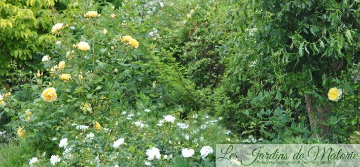 Chroniques de mon jardin : le massif jaune