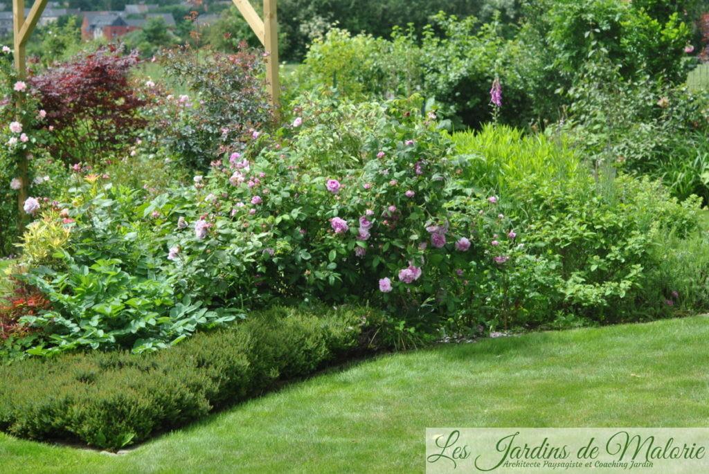 le massif de la goutte avec le très beau rosier 'Jenny Duval'