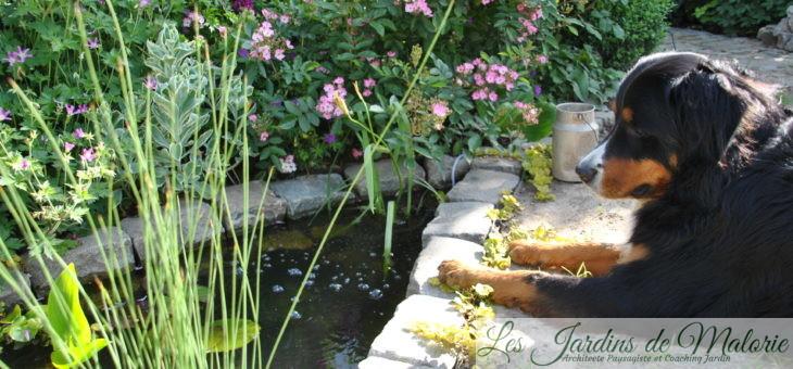 Chroniques de mon  jardin: Le petit bassin