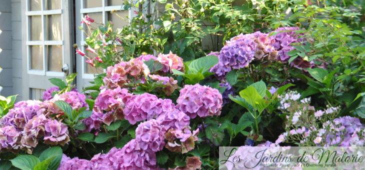 Chroniques de mon jardin: Beautés d'août (1)