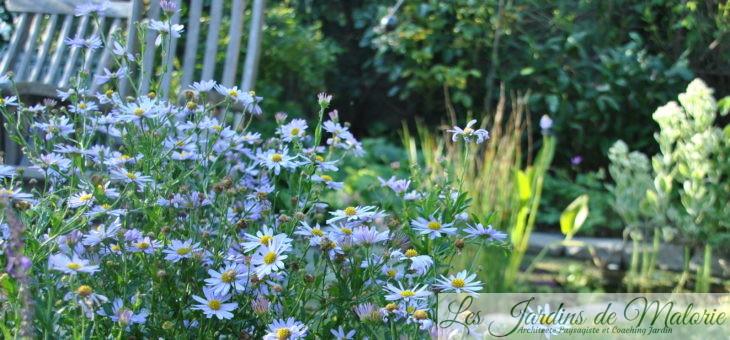 Chroniques de mon jardin: Beautés d'août (2)