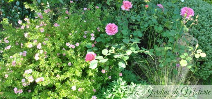 Chroniques de mon jardin: Beautés d'août (3)