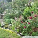 Chroniques de mon jardin : Avant/après (1)