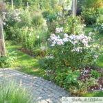 Chroniques de mon jardin: Beautés d'août