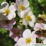🦋 Abeilles, papillons & co