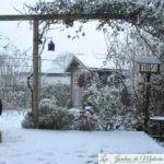 🐶 Les chroniques de Nala: dans la neige