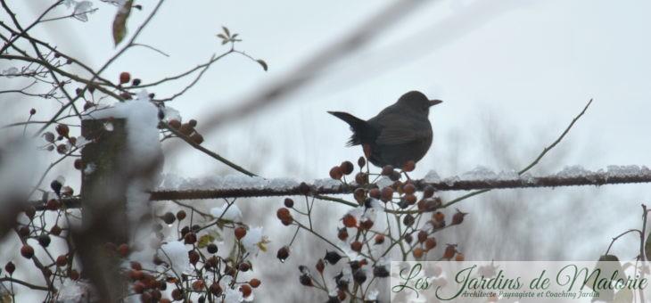 🐦 Comptage des oiseaux ces 2 et 3 février: Devine qui vient manger au jardin