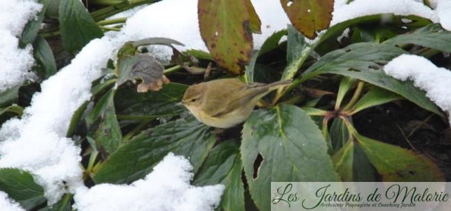 Oiseaux du jardin : un Pouillot & cie