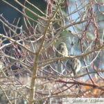 🐦 Le ballet des oiseaux au jardin