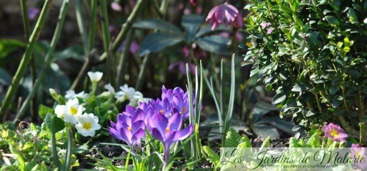 Chroniques de mon jardin: Bientôt le printemps!