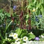 Chroniques de mon jardin: beautés de fin mars