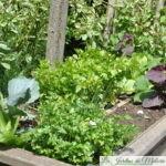 Chroniques de mon jardin: le potager surélevé déménage