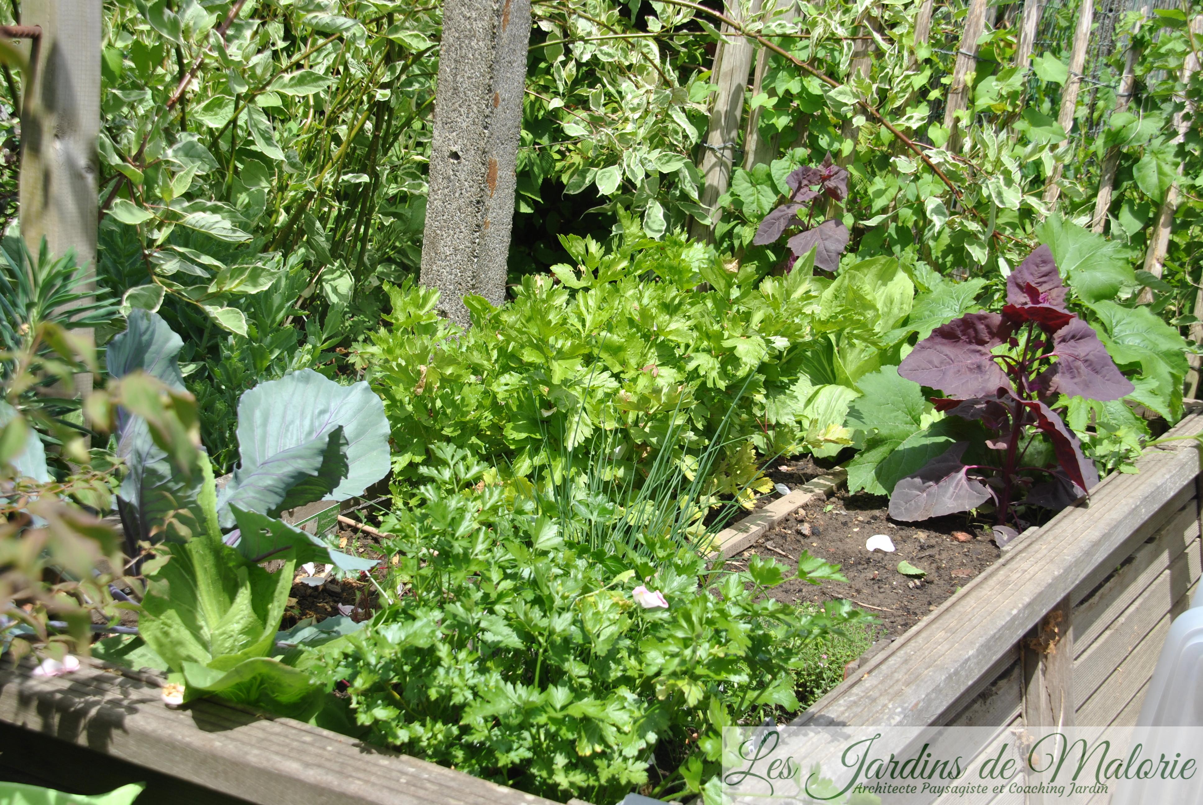 Le Jardin Potager En Janvier potager (photo de juin) - les jardins de malorie