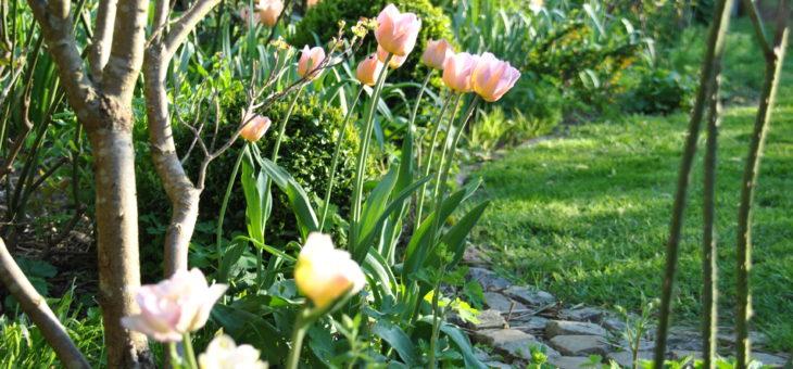 Chroniques de mon jardin: beautés d'Avril