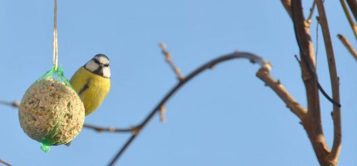 Comptage des oiseaux : Devine qui vient manger au jardin