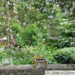 Chroniques de mon jardin : floraisons du moment