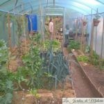 Visite du jardin en permaculture de Michel Steingueldoir