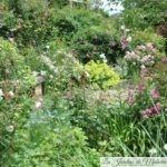 Chroniques de mon jardin: autour de la terrasse ronde en juin