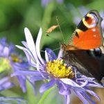 曆 Devine qui papillonne au jardin!
