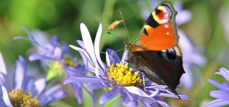 Devine qui papillonne au jardin!