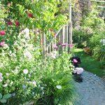 Chroniques de mon jardin : Beautés de fin juin