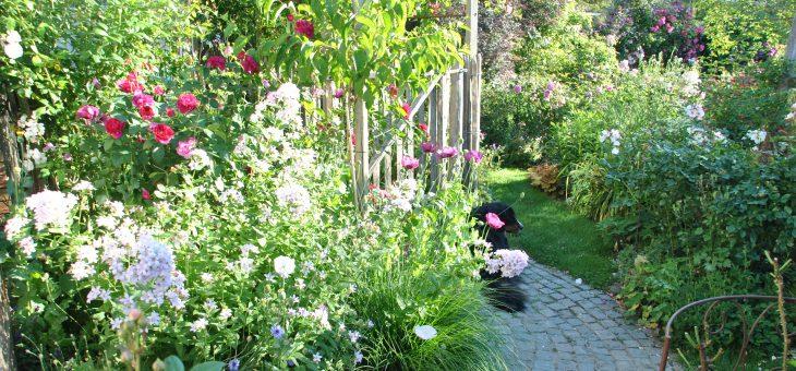 Chroniques de mon jardin