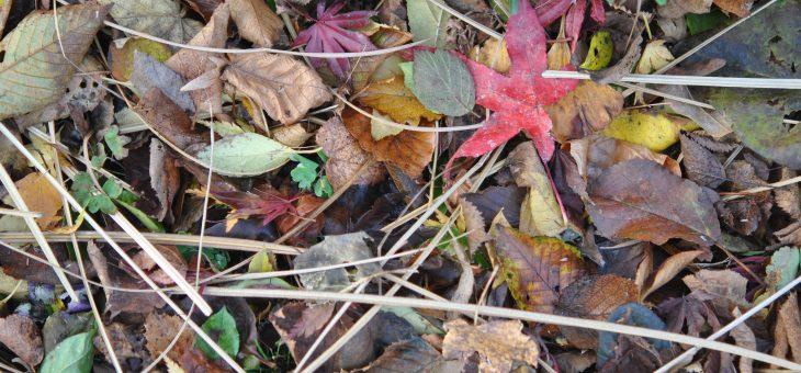 Les feuilles mortes, un trésor!