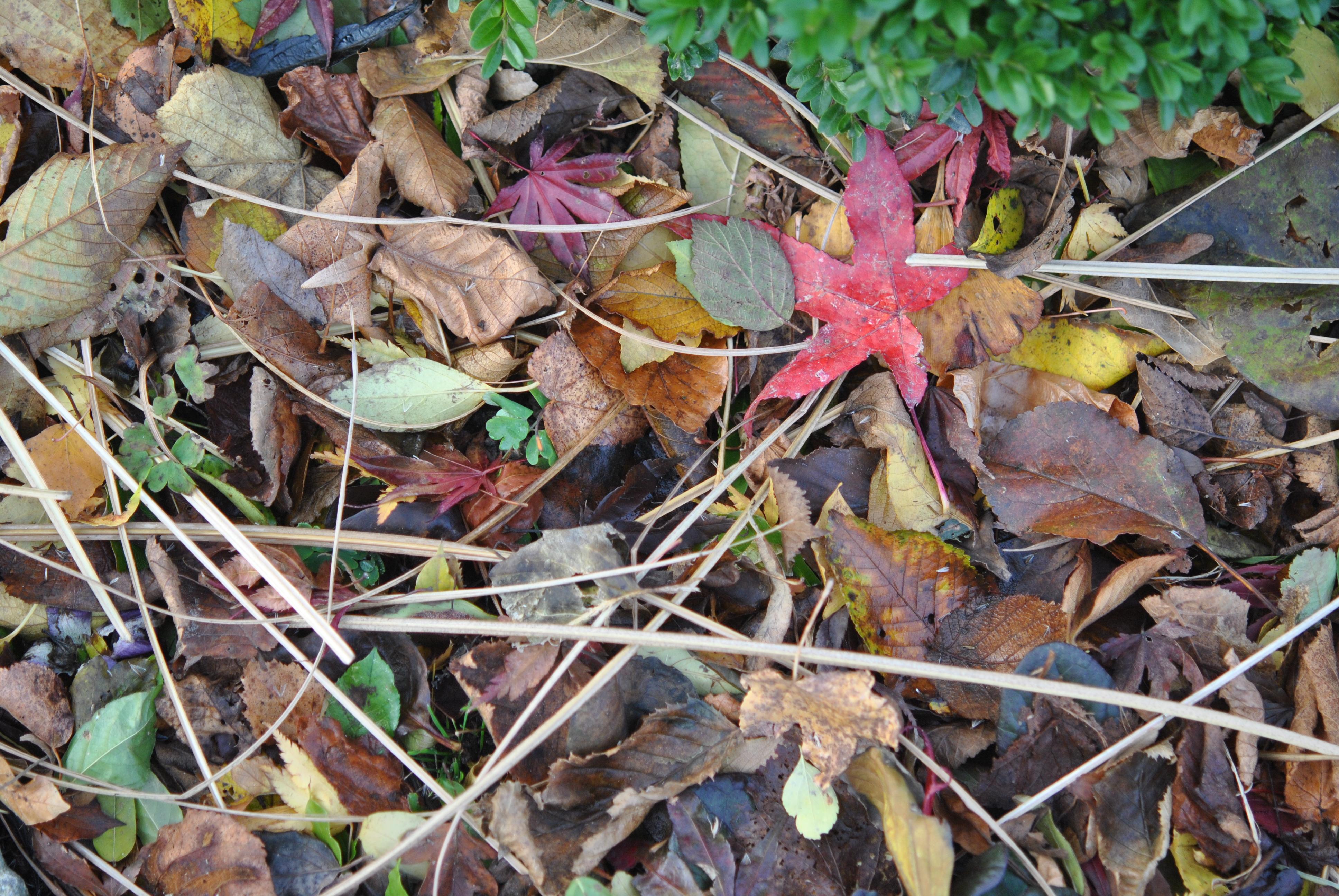 Compost De Feuilles D Érable les feuilles mortes, un trésor! - les jardins de malorie