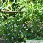 Chroniques de mon jardin: émerveillement...
