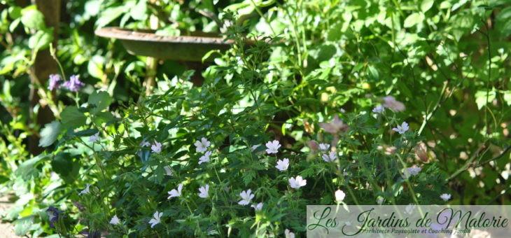 Chroniques de mon jardin: émerveillement…