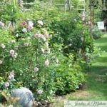 Cette semaine au jardin... (1)