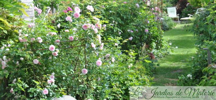 Cette semaine au jardin… (1)