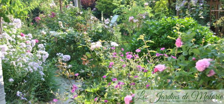 Dernière semaine de juin au jardin
