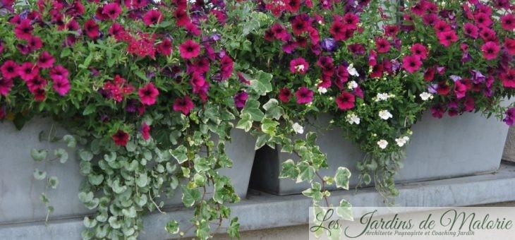 Jardinières fleuries en pourpre et blanc