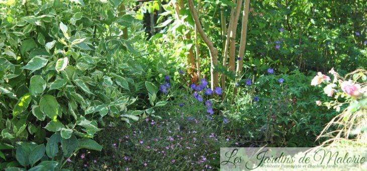 Chroniques de mon jardin: beautés de début juillet