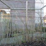 Travaux de janvier: taille et palissage des rosiers lianes