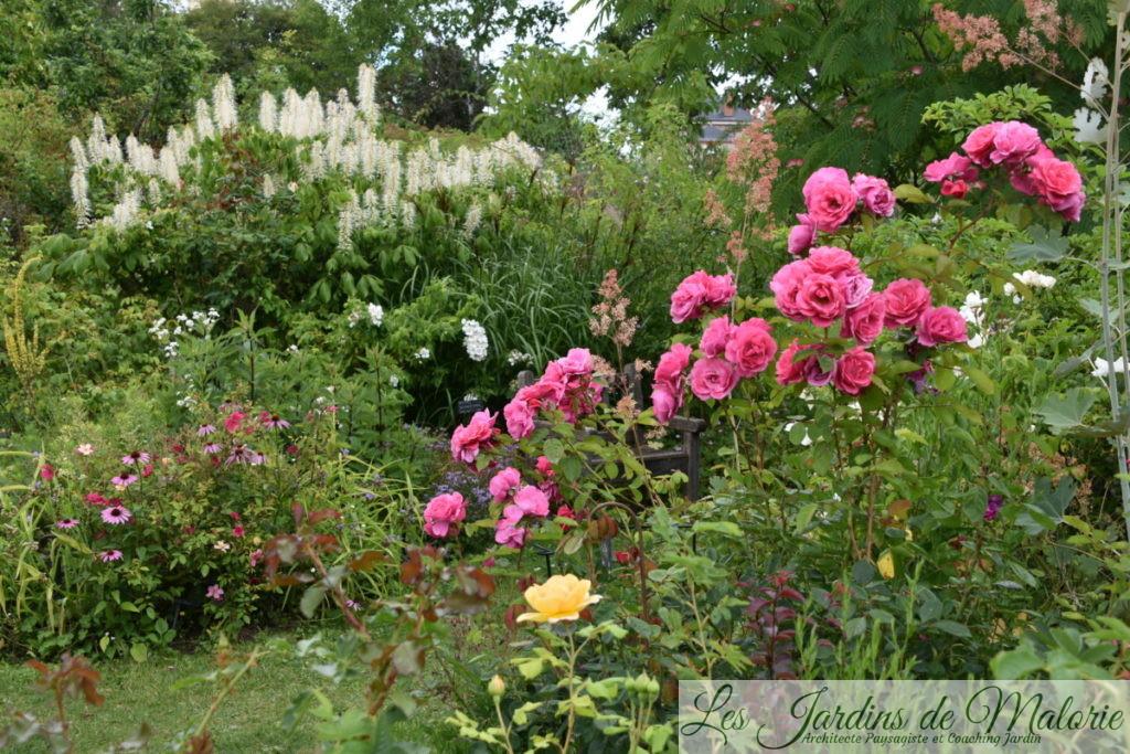 aesculus parviflora et rosa 'Etude'