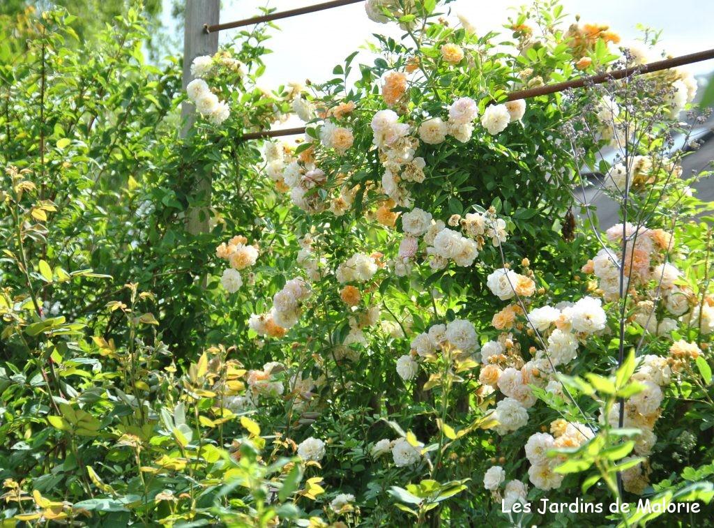 structures pour rosiers grimpants les jardins de malorie. Black Bedroom Furniture Sets. Home Design Ideas