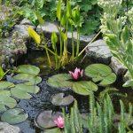 🐸 Création d'une petite pièce d'eau au jardin