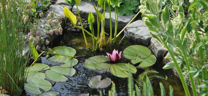 Création d'une petite pièce d'eau au jardin